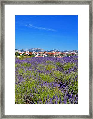 Lavendar Of Provence Framed Print