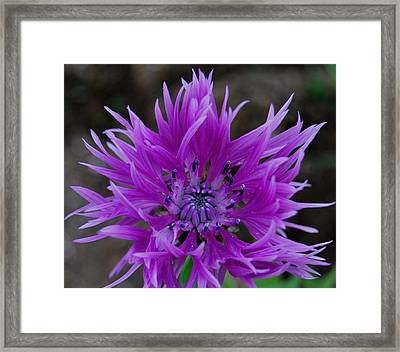 Lavender And Blue Framed Print