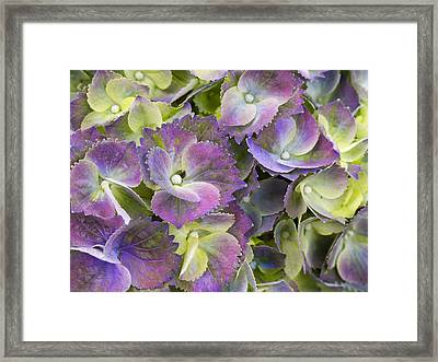Lavender And Lime Framed Print by Eggers Photography