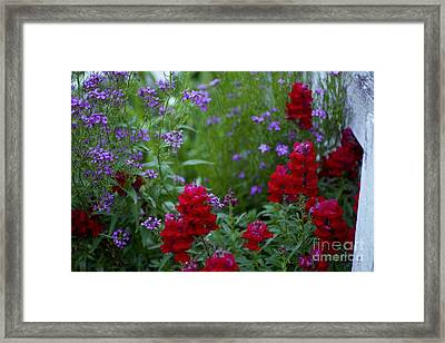 Lavender And Ruby Framed Print