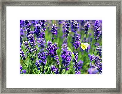 Framed Print featuring the photograph Lavender And The Heart by Ryan Manuel
