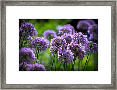 Lavender Breeze Framed Print