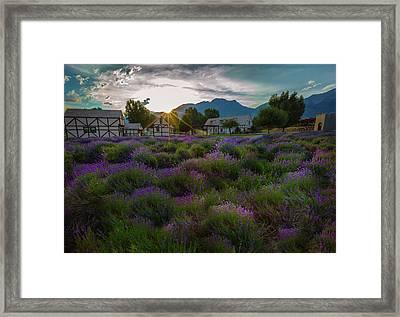 Lavender Delight Framed Print
