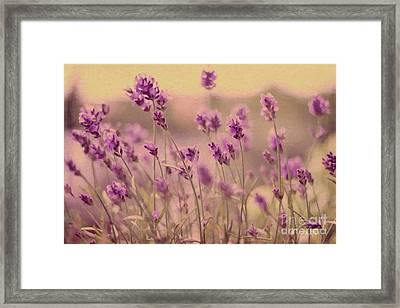 Lavender Dreaming ... Framed Print by Chris Armytage