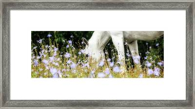 Lavender Dreams Framed Print