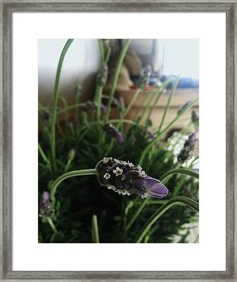 Lavender Energy Framed Print by Tara Miller