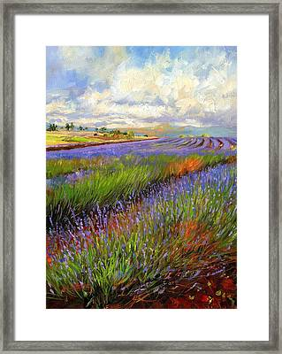 Lavender Field Framed Print by David Stribbling