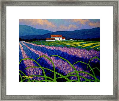Lavender Field France Framed Print by John  Nolan