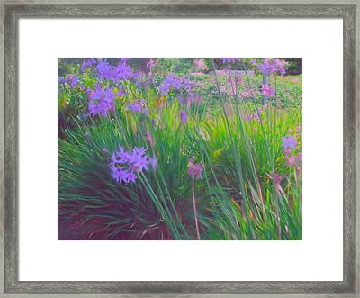 Lavender Field Framed Print by Maribel McIntosh