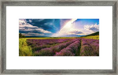 Lavender Field Panorama Framed Print
