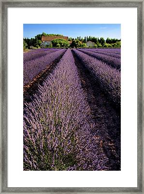 Lavender Field Provence France Framed Print