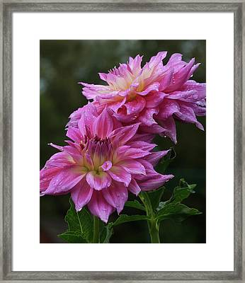 Framed Print featuring the photograph Lavender Fields Bouquet by Robert Pilkington