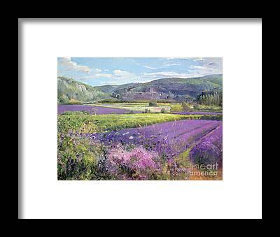 Lavender Field Framed Prints