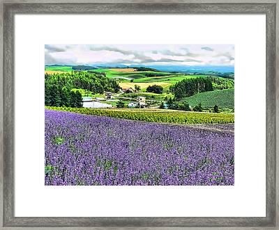Lavender Fields Framed Print by Kathy Tarochione