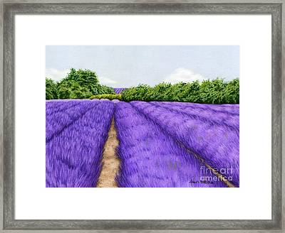 Lavender Fields Framed Print by Sarah Batalka