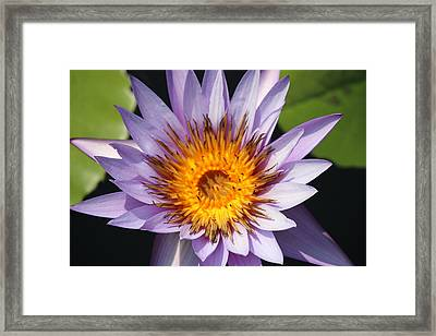 Lavender Fire Open Framed Print