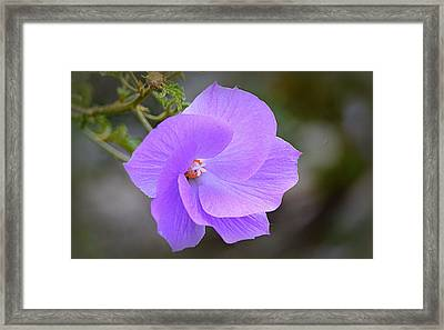 Framed Print featuring the photograph Lavender Flower by AJ Schibig