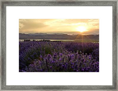 Lavender Glow Framed Print by Chad Dutson