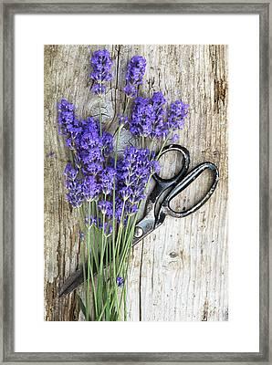 Lavender Harvest Framed Print by Tim Gainey