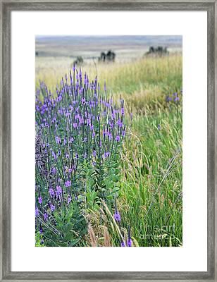 Verbena Hills Framed Print