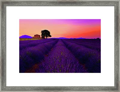 Lavender Home Framed Print