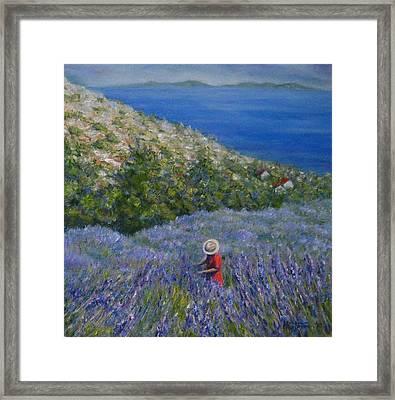 Lavender In Full  Bloom Framed Print by Mirjana Gotovac