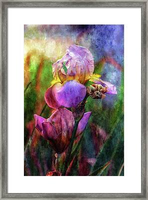 Lavender Iris Impression 0056 Idp_2 Framed Print