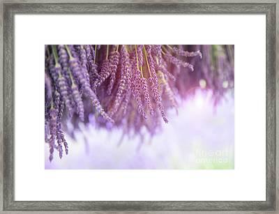Lavender Framed Print by Jane Rix