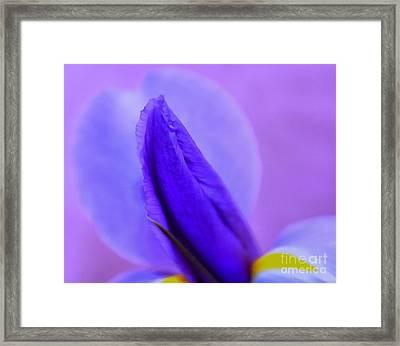 Lavender Life Framed Print by Krissy Katsimbras