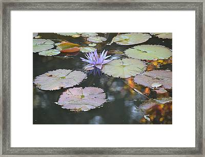 Lavender Lily And Autumn Reflection Framed Print
