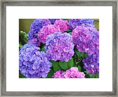 Lavender On My Mind Framed Print