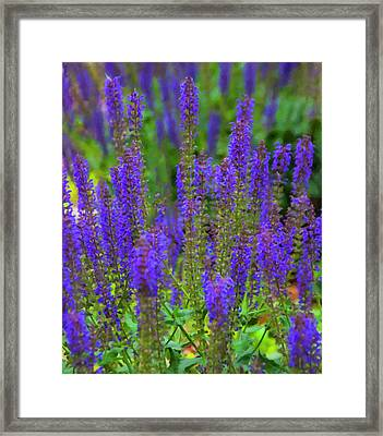 Framed Print featuring the digital art Lavender Patch by Chris Flees