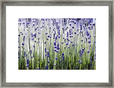 Lavender Patterns Framed Print
