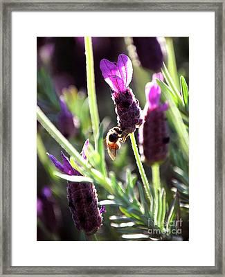 Lavender Pink Framed Print by DiDi Higginbotham