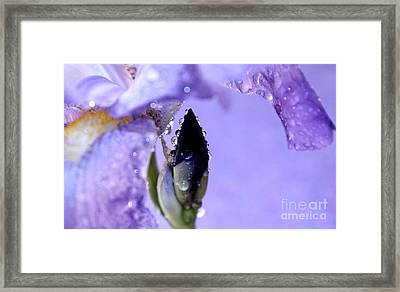 Lavender Rain Framed Print by Krissy Katsimbras