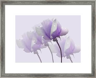 Lavender Roses  Framed Print by Rosalie Scanlon