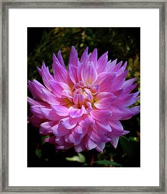 Lavender Shot Framed Print by Uli Gonzalez
