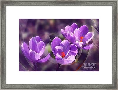 Lavender Spring Framed Print