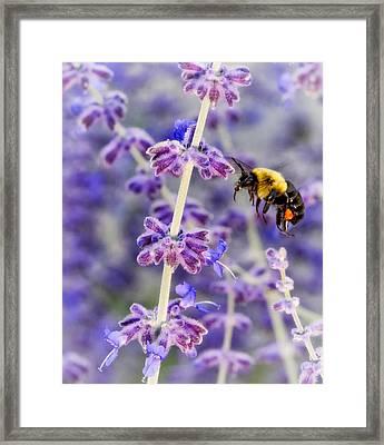 Lavender Summer Day - Paint Framed Print by Steve Harrington
