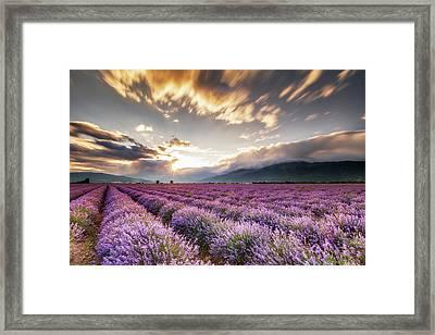 Lavender Sun Framed Print