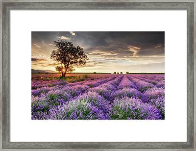 Lavender Sunrise Framed Print by Evgeni Dinev