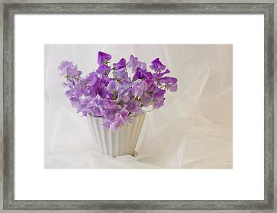 Lavender Sweet Peas And Chiffon Framed Print by Sandra Foster