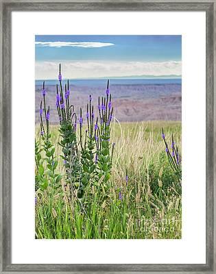 Lavender Verbena And Hills Framed Print