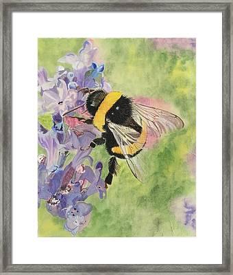 Lavender Visitor Framed Print