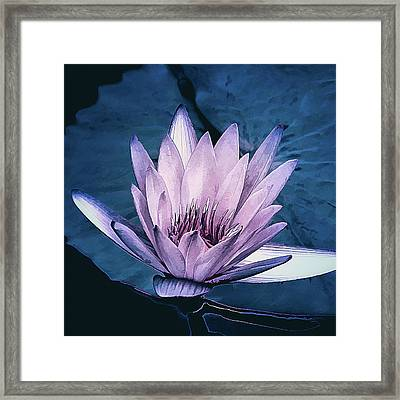 Lavender Water Lily  Framed Print by Julie Palencia