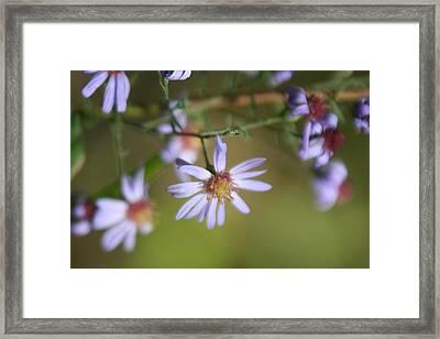 Lavender Wildflowers Framed Print by Gregory Jeffries