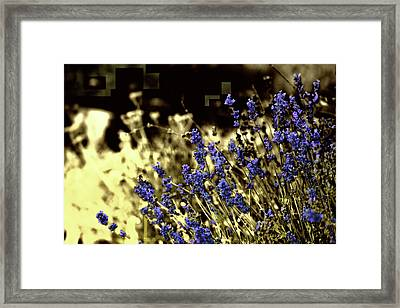 Lavender Yellow Framed Print