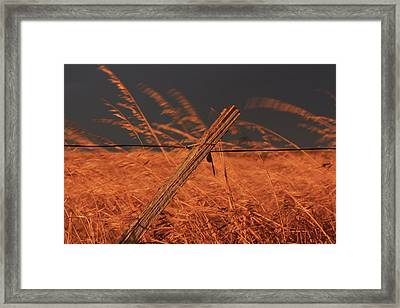 Lay Me Down In Golden Pastures Framed Print
