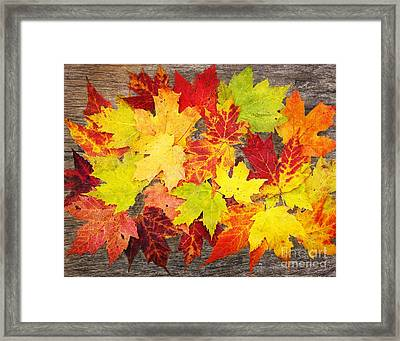 Layered In Leaves Framed Print