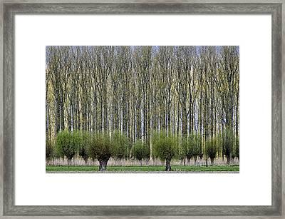 Layers Framed Print by Henk Van Maastricht